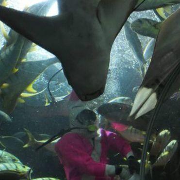 У Сінгапурському океанаріумі скат убив дайвера