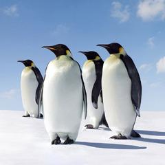 Біля Антарктиди буде створено найбільший морський заповідник (відео)