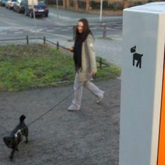В Іспанії собак, що мітять тротуари, шукатимуть за ДНК
