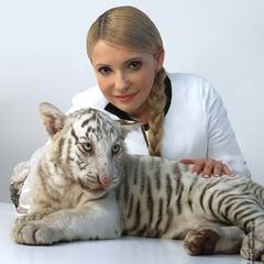 Жадоба влади геть задурила голову Юлії Тимошенко
