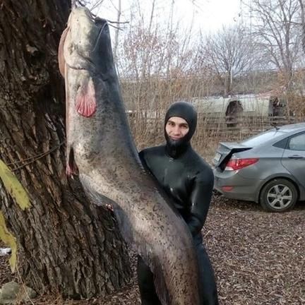 Рибалці, який вполював сома-гіганта, погрожують розправою