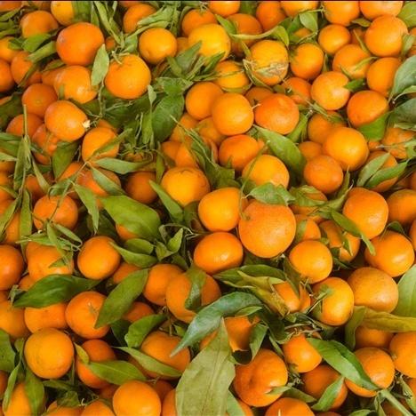 Зіпсовані свята: В Одесу завезли заражені мандарини