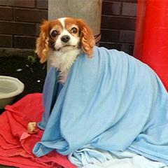 Лондонський Хатіко: пес чекав госпіталізованого господаря біля дверей лікарні (фото)