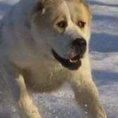 У Харкові патрульний застрелив вівчарку, яка напала на дитину (відео)