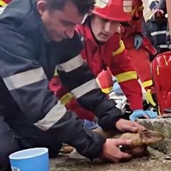 Румунський пожежний, що оживив собаку, став зіркою Facebook