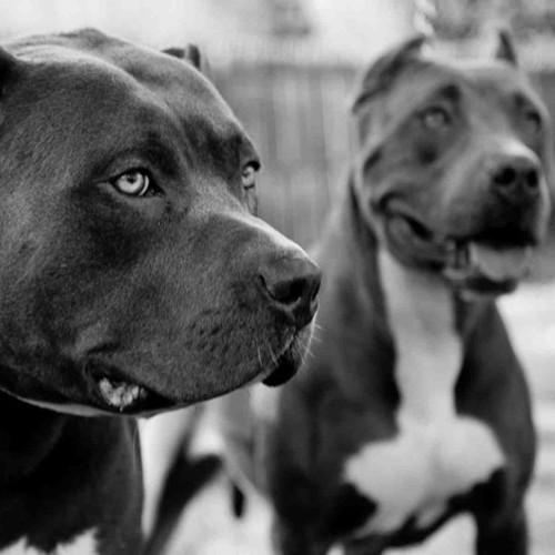 У Києві планується масове отруєння собак