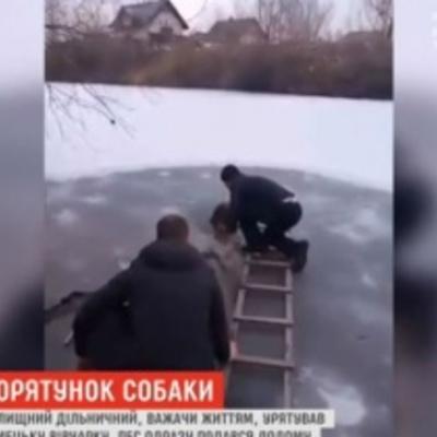 На Київщині дільничний влаштував рятувальну операцію для вівчарки, яка замерзала в ополонці