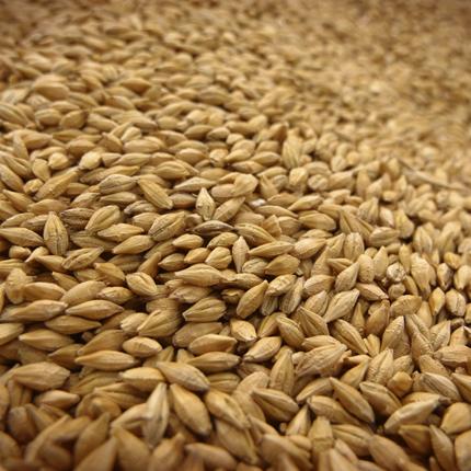 Хто найбільше «з'їдає» українського зерна?