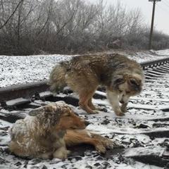 Порятунок собак на залізничних коліях на Закарпатті. Продовження історії (фото)