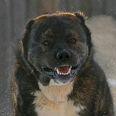 В Одесі «вовкодави» напали на людей (фото)
