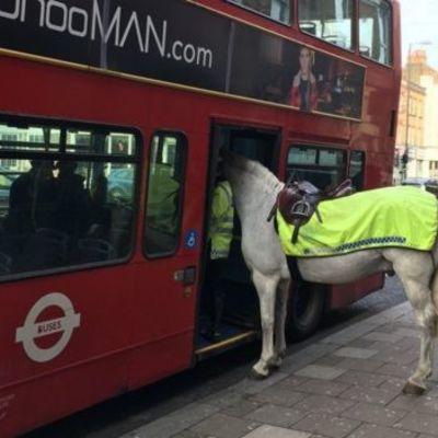 У Лондоні кінь намагався сісти в автобус (фото)