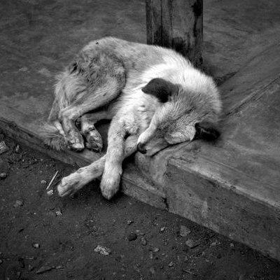 Жах: розстріл собак на очах у киян