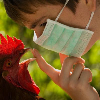 В Україні зафіксовано спалах пташиного грипу