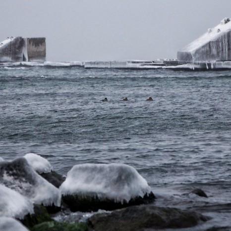 Море біля Одеси починає замерзати: вражаючі фото явища