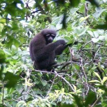 Новий вид приматів назвали на честь героя «Зоряних воєн»