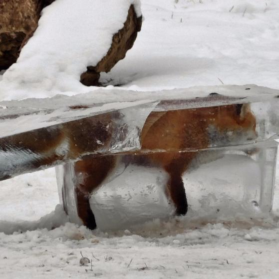 Моторошно. У Німеччині знайшли лисицю, яка замерзла в брилі льоду (фото)