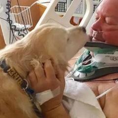 «Золотистий герой» або як собака врятувала життя своєму господареві