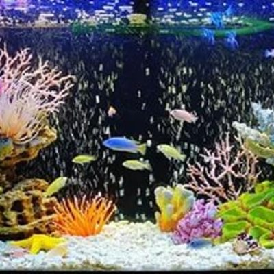 Неймовірно, студенти в США навчили рибу управляти акваріумом на колесах (відео)