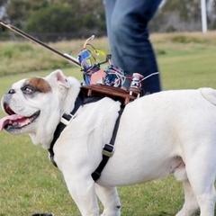 Американець винайшов пульт управління собакою (відео)