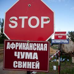 На Дніпропетровщині ввели карантин через африканську чуму