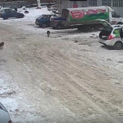 «Жорстокий наїзд», жителька Самари спеціально розчавила собаку, що стояла перед її автомобілем (відео)