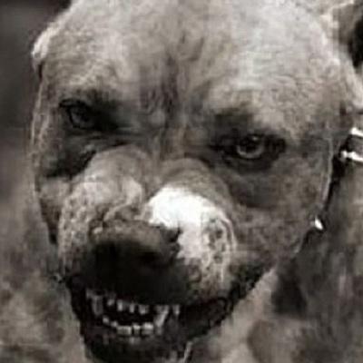 На Вінничині двоє собак на смерть загризли жінку
