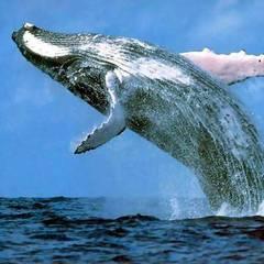 «Сині кити»: у Києві затримано двох адміністраторів даних груп
