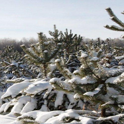 На крупних хабарах затримано керівників лісогосподарств на Рівненщині (фото)
