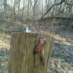 На Київщині знайдено братську могилу жорстоко вбитих тварин (фото 18+)