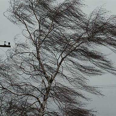 Рятувальники попереджають про сильний вітер в Києві