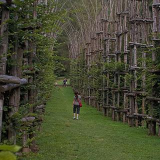 Cattedrale vegetale: в Італії завершено будівництво «Рослинного храму» (фото)