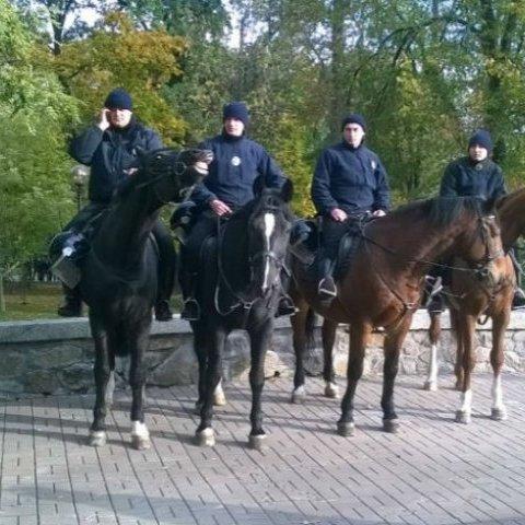 У Києві патрульна на коні знесла з ніг перехожу дівчину