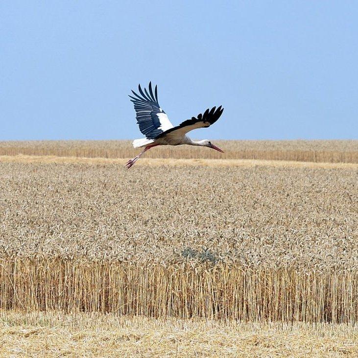 За кредити МВФ потрібно платити: Україна буде змушена дозволити продаж сількогосподарських угідь з 2018 року