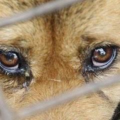 Закон про кримінальну відповідальність за жорстокість до тварин підтримали в першому читанні