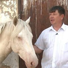 Золотиста грива та блакитні очі: у Казахстані вивели новий тип породи коней (фото)