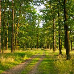 У столичних лісах висадили понад 1 млн сіянців сосни та облаштували зони відпочинку