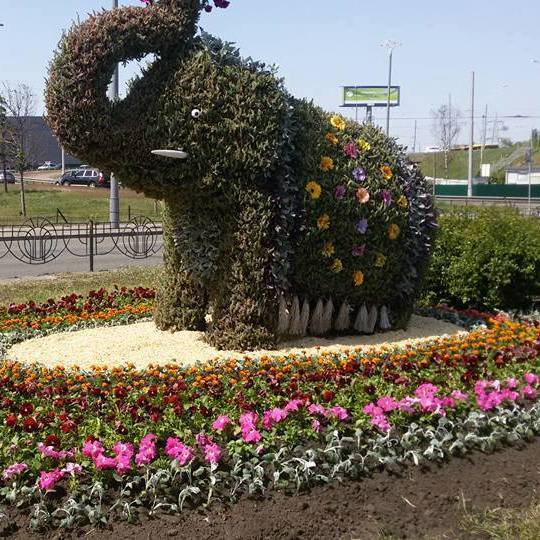 Зеленбудівці пояснили, чому на Оболоні із квітів споруджено саме слона