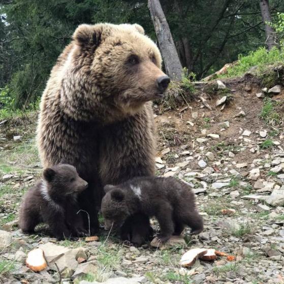 З'явилися фото милих звірят, які народилися у нацпарку Синевір (фото)