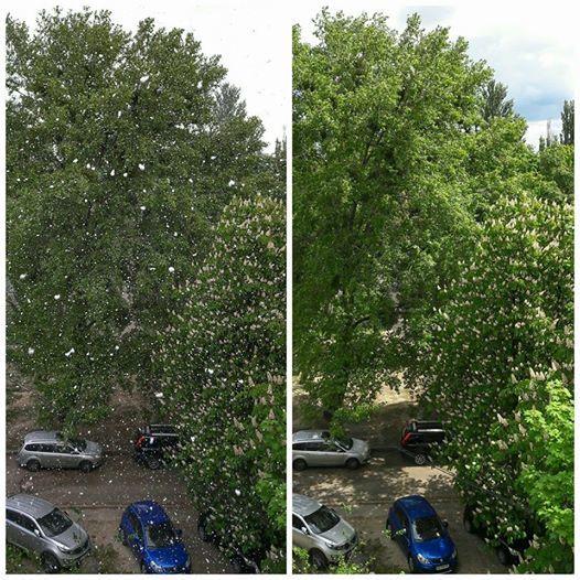 20 днів до літа: у Києві випав сніг (фото, відео)