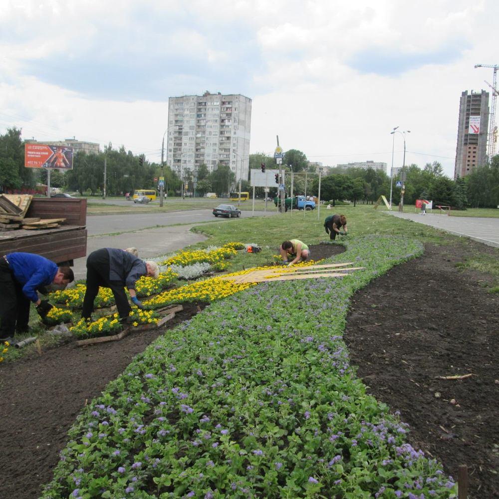 Патріотична столиця: у Святошинському районі з'явиться квітковий прапор України (фото)