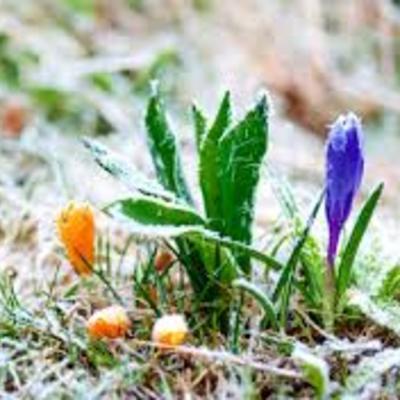 У чотирьох областях України очікуються заморозки