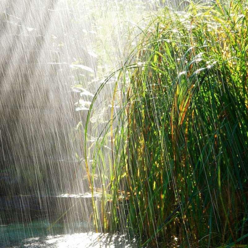 Україною з 23 по 28 травня прокотяться дощі, - повідомляє Укргідрометцентр
