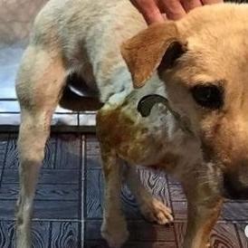 Нелюди: У Києві невідомі зламали собаці передні ноги та всадили 9 куль