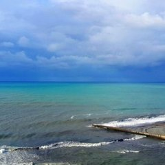 Кілька десятків мертвих дельфінів викинуло на пляжі Одеси через недбальство браконьєрів