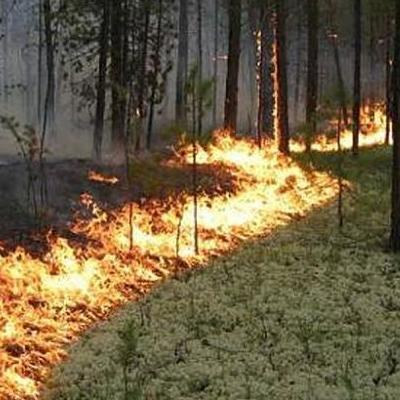Синоптики попереджають про виский рівень пожежної небезпеки з 4  по 6 червня
