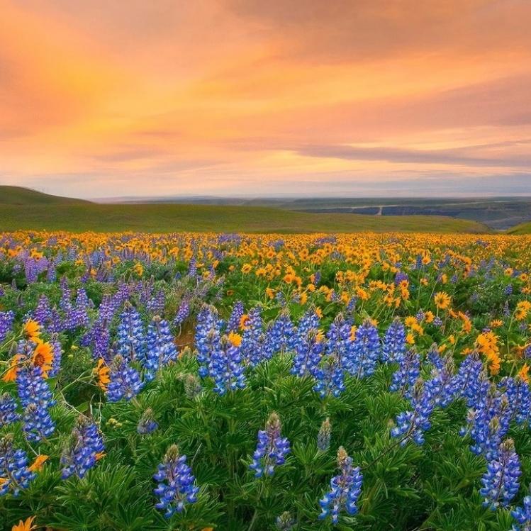5 червня відзначають Всесвітній день охорони навколишнього середовища