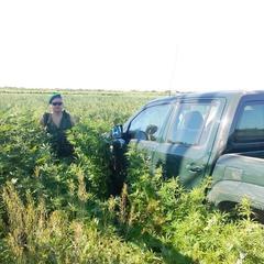В Одесі знайдено плантацію з коноплею площею в 3,7 гектара (фото)