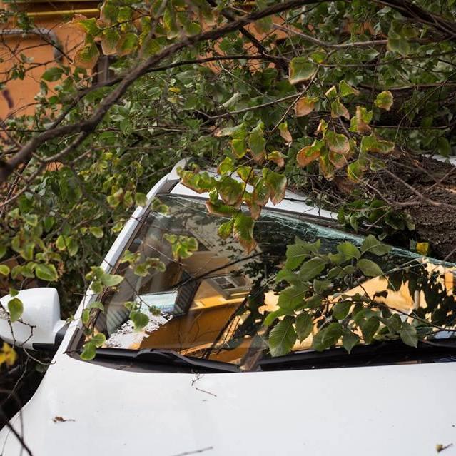 У Києві дерево впало на парковку і розчавило три автомобілі (відео)