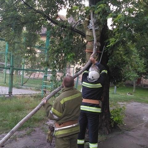 У Києві загорілося дерево від удару блискавки