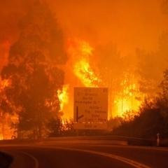 Масштабні лісові пожежі у Португалії забрали життя 43 людей